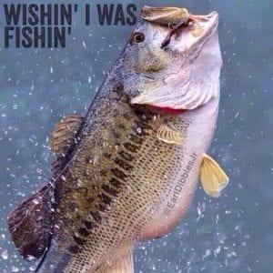 fishn